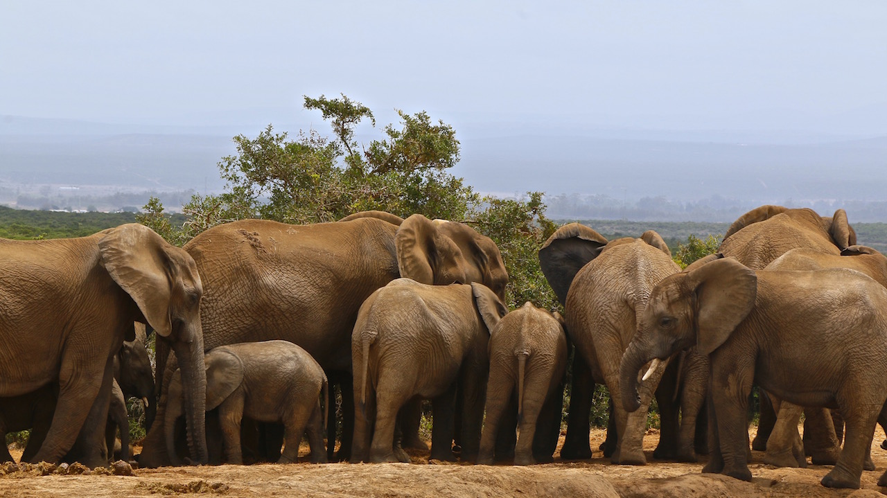 Safari_na_Africa_do_Sul_Addo_Park21